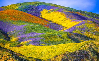 Spring Symphony #1: Carrizo Plain Superbloom California Fine Art Landscape Nature Photography Prints & Wall Art