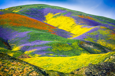 Superbloom Symphony: Carrizo Plain National Monument Wildflower Superbloom: Elliot McGucken California Fine Art Landscape Nature Photography