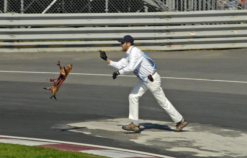 Ferrari Road Kill