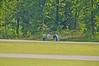 2012-04-15-16-06-11_CRS4230