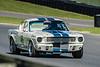 Jim Middleton's 1966 Shelby GT 350H enters the start/finish stretch. (Photographer: Jon Jeffress)