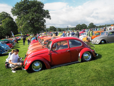 Beetles on Show