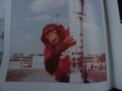 Somebody loose thier monkey?
