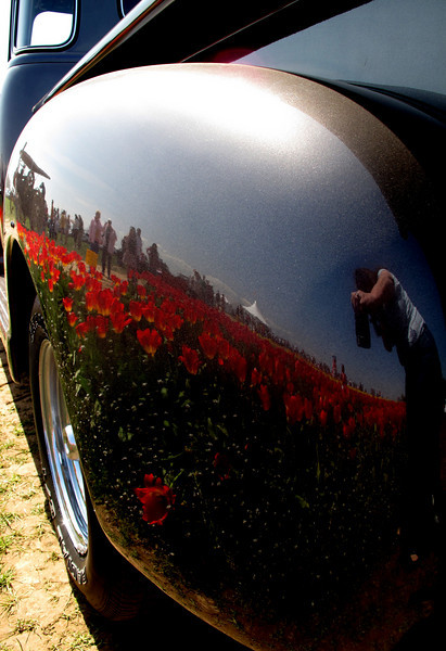 Is it skin or reflection the the tulips in this 1950's Chevy pickup