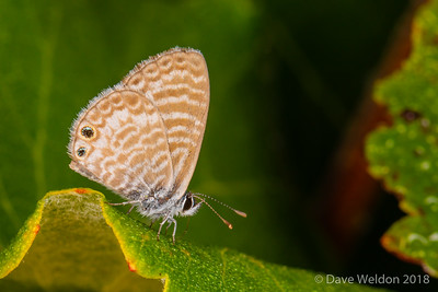 Macro photography - butterfly at Manhattan Beach Botanical Garden July 2018