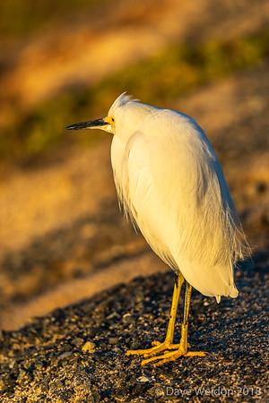 Dave Weldon - Bolsa Chica Wetlands wildlife photo