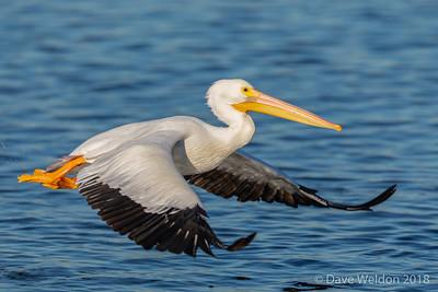 Dave Weldon photographer @ Bolsa Chica Wetlands