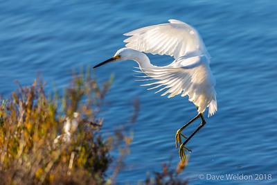 Dave Weldon Photographer @ Bolsa Chica Wetlands,