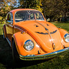 Bobs Orange Bug-101