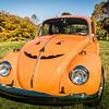Bobs Orange Bug-95