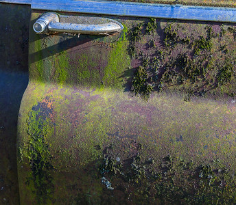 Moss, Mold & Lichen