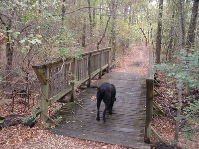 Here's a dog just wandering down the path the other way from the cabin to the woods......TO THE DUMPSTER!