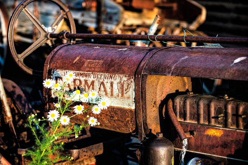 White prairie flowers and vintage Farmall