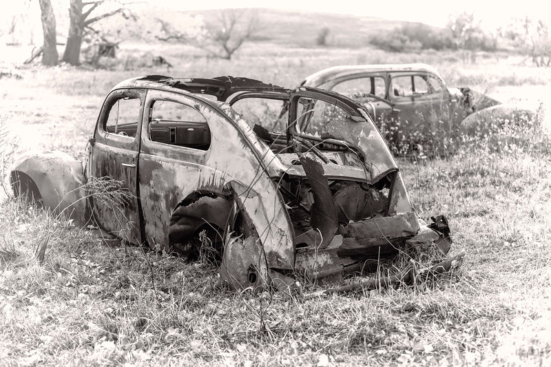 Rusty Ford Tudors in a pasture