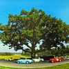 OAK TREE TURN AT VIR