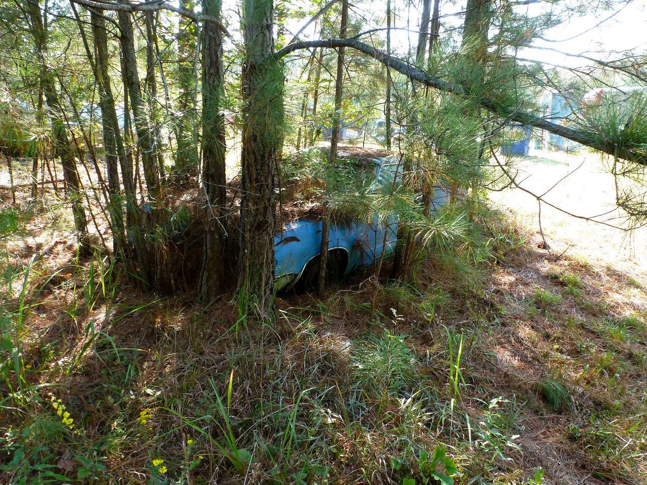 Can get a good deal on a Mustang, but will need a chain saw to get it out.