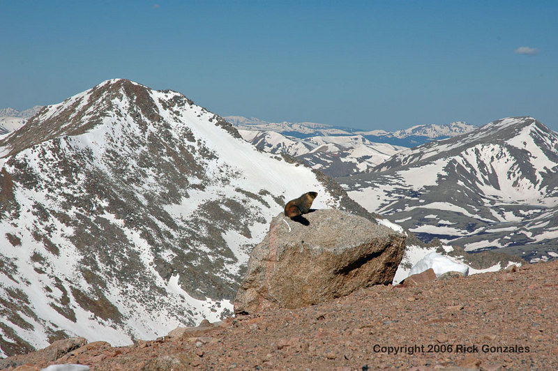 A Yellow Bellied Marmot enjoying the view. Mt Evans has more marmots per mile than any other known mountain in Colorado.