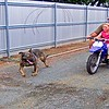 Nellie enjoys the run with Keith & Paige at his pad in Rockhampton.