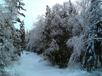 Ice Storm, march 9, 2008 CIMG1809as