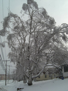 Ice Storm, march 9, 2008 CIMG1783s