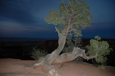 As the light disappears Friday evening, some artificial light is utilized for this shot. Colorado National Monument.