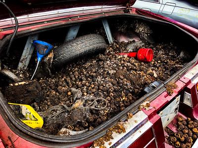 Buick Riviera convertible Holland's Auto Parts, Billerica, MA