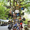 "If your tastes run to the macabre, check out The infamous ""Tree of Shame"" a monument to the unfortunate souls who have crashed their bikes along the Tail of the Dragon. Bike parts are nailed to the tree and dangling from branches."