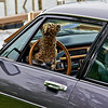 FtW Boat Club Car Show 05-09-09