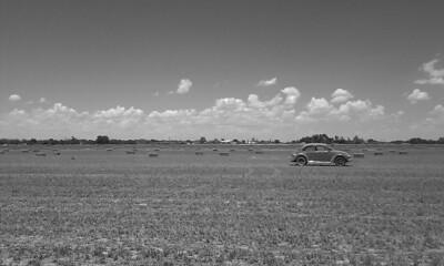 A bug in a field
