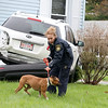 There was a three vehicle MVA at the corner of Franklin and Oak Hill Streets in Fitchburg on Thursday morning. Fitchburg Control Officer Suzan Kowaleski works with this female boxer mix that was in one of the vehicles that was involved in the accident. SENTINEL & ENTERPRISE/JOHN LOVE