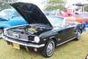 Mustang - Owner - Whitey
