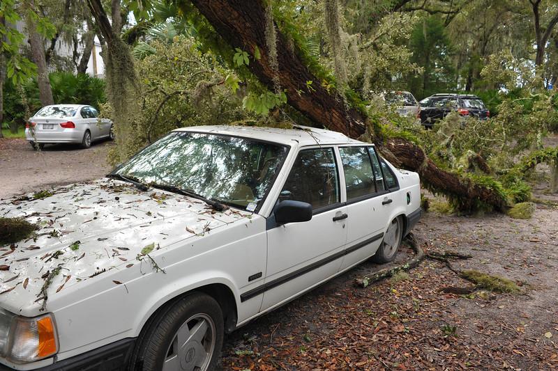 Car crushed by Oak Tree at Jekyll Harbor Marina on Jekyl Island, Georgia after storm winds 10-10-11