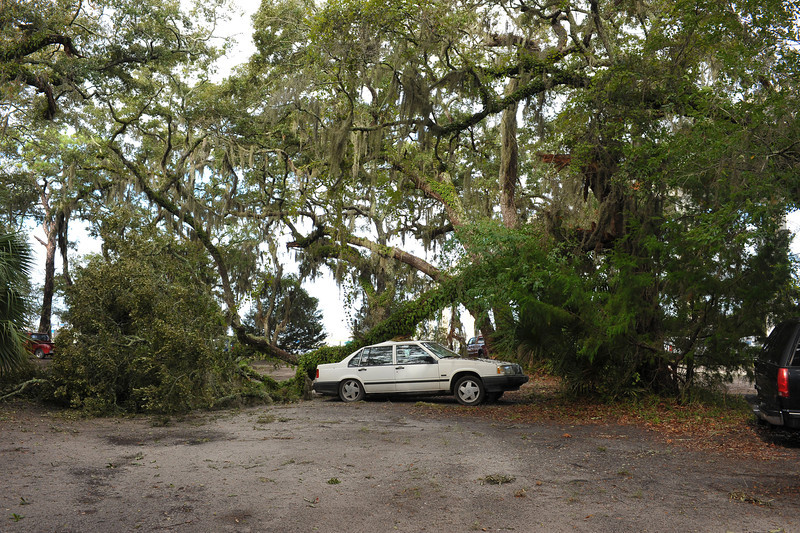 Car crushed by Oak Tree at Jekyll Harbor Marina on Jekyl Island, Georgia after storm winds 10-10-11