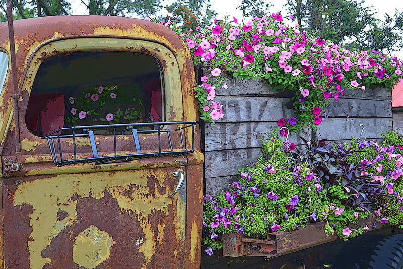 Flower Truck -  Taken at Fairhaven Farm in South Haven, MN.