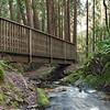 Forest Bridge