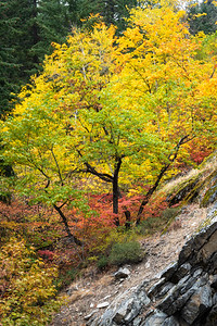 Cascade Mountain Fall