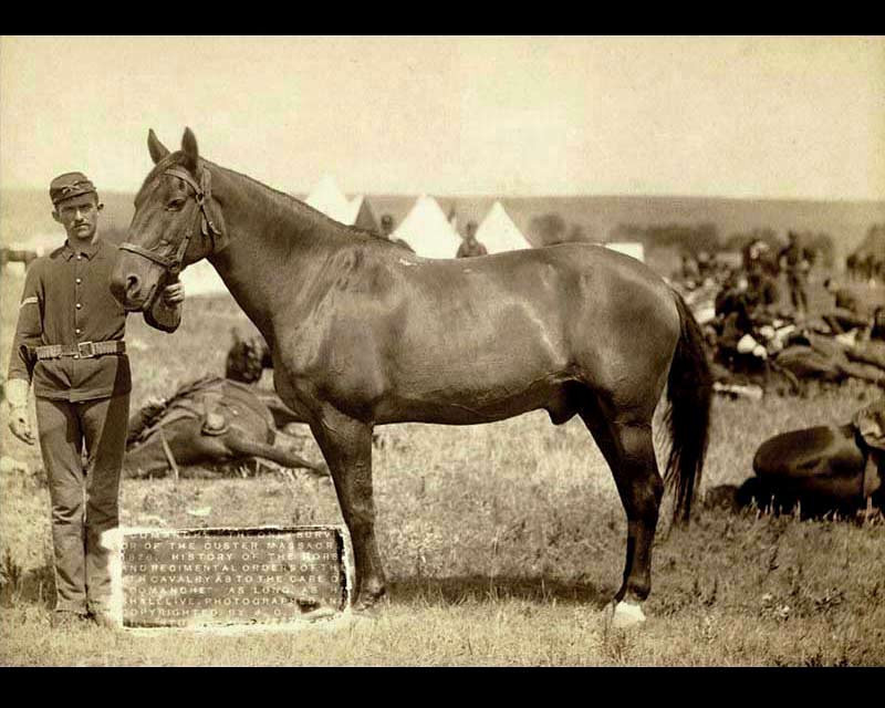 Comanche was reputed to be the only survivor of the Little Bighorn, but quite a few Seventh Cavalry mounts survived