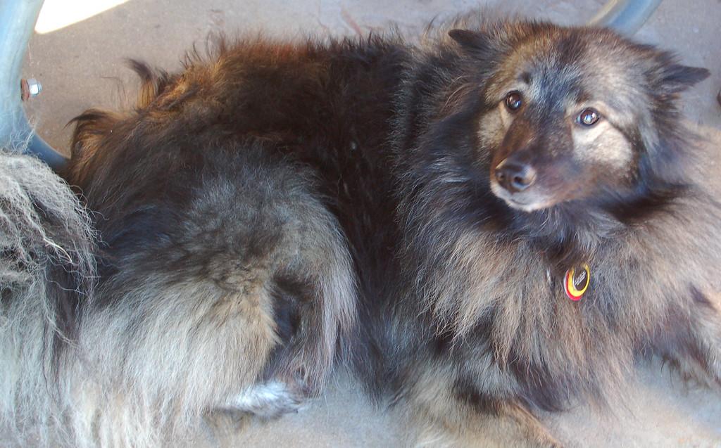 Kira, official Rendezvous pet.