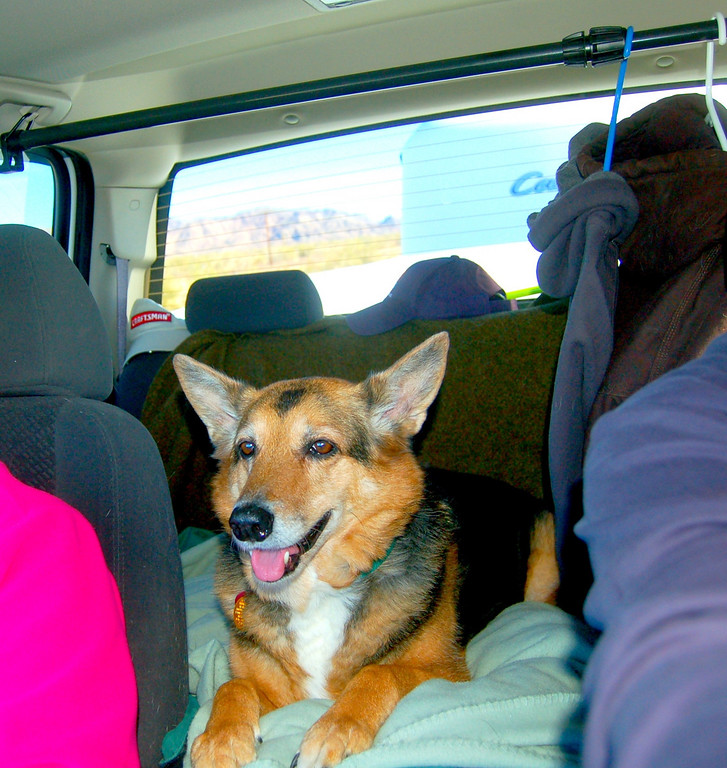 Sadie, our constant companion, has developed into a wonderful travel companion. She easily adapts to new situations, demands little and is always a source of entertainment.