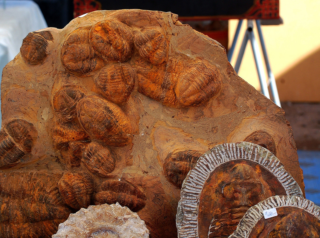 Fossils from all over the  world are on display.