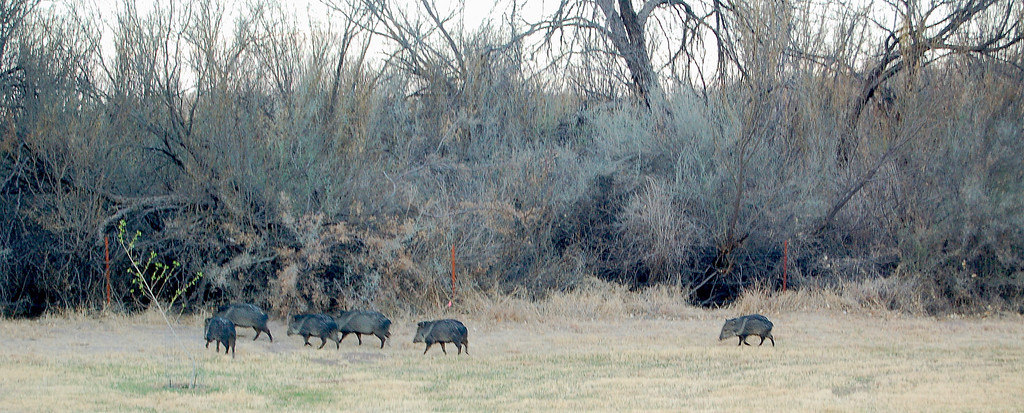 Well behaved daily visitors to Cottonwood Campground