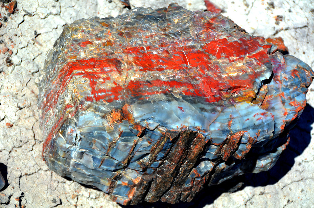 "I was amazed by the many colors displayed in the petrified wood I found in the park. ""The brilliant colors in the petrified wood come mainly from three minerals. Pure quartz is white, manganese oxides form blue, purple, black, and brown, and iron oxides provide hues from yellow through red to brown."""