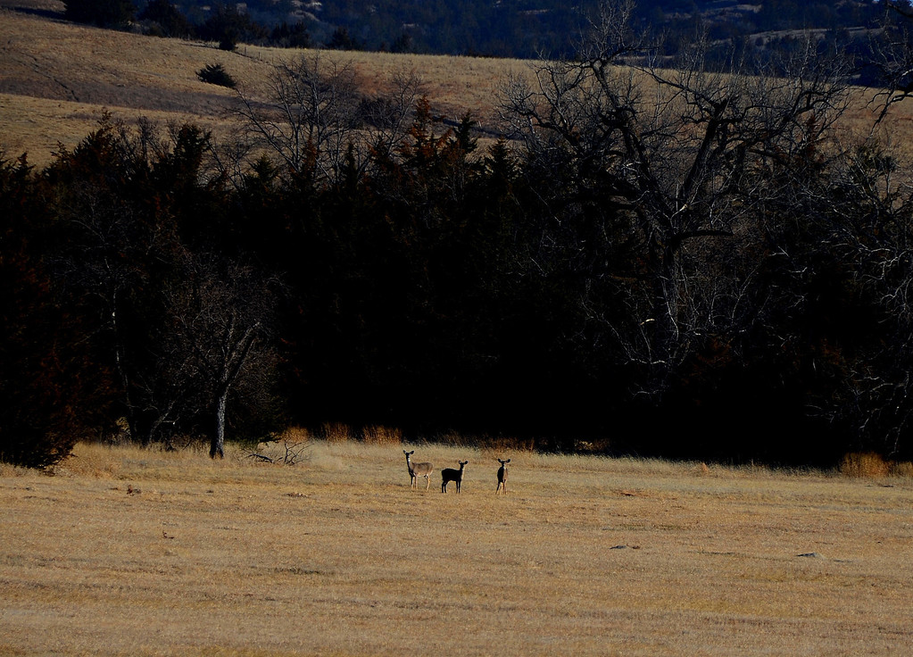 The deer in the distance are curious about the big white egg parked on the hill above their meadow.