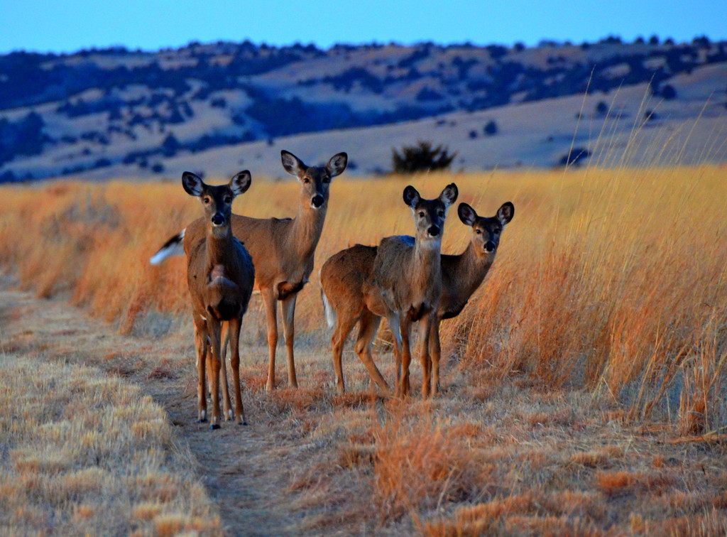 The deer at the Sanctuary are numerous and willing to accommodate being photographed.