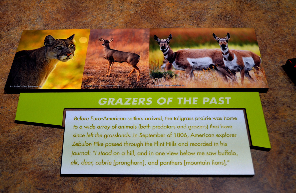 Like Lewis and Clark, Zebulon Pike recorded the appearance of species now no longer native to the area. Bear, elk, mountain lion, antelope, buffalo and wolves were once plentiful in the area.