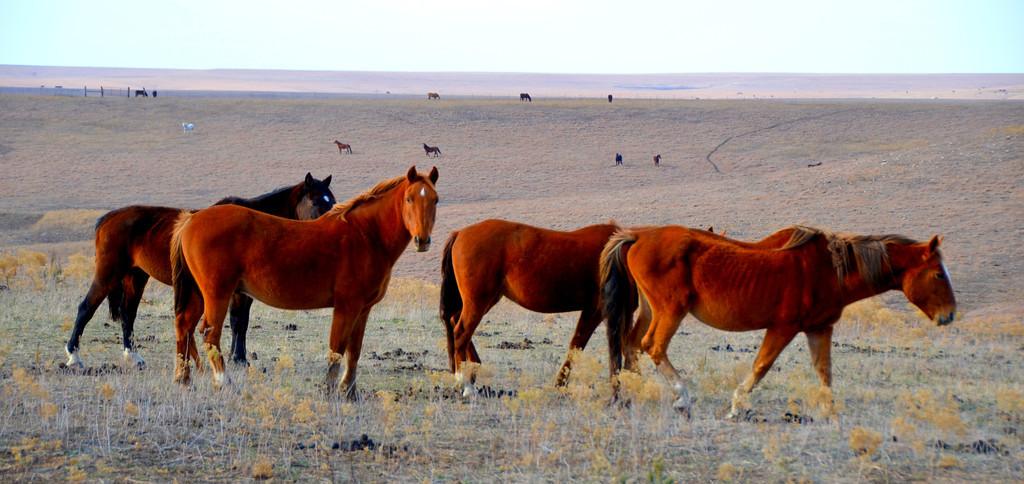 "Wild Horse Controvesy In Kansas<br />  <a href=""http://rtfitchauthor.com/2012/05/18/wild-horse-controversy-in-kansas/"">http://rtfitchauthor.com/2012/05/18/wild-horse-controversy-in-kansas/</a>"