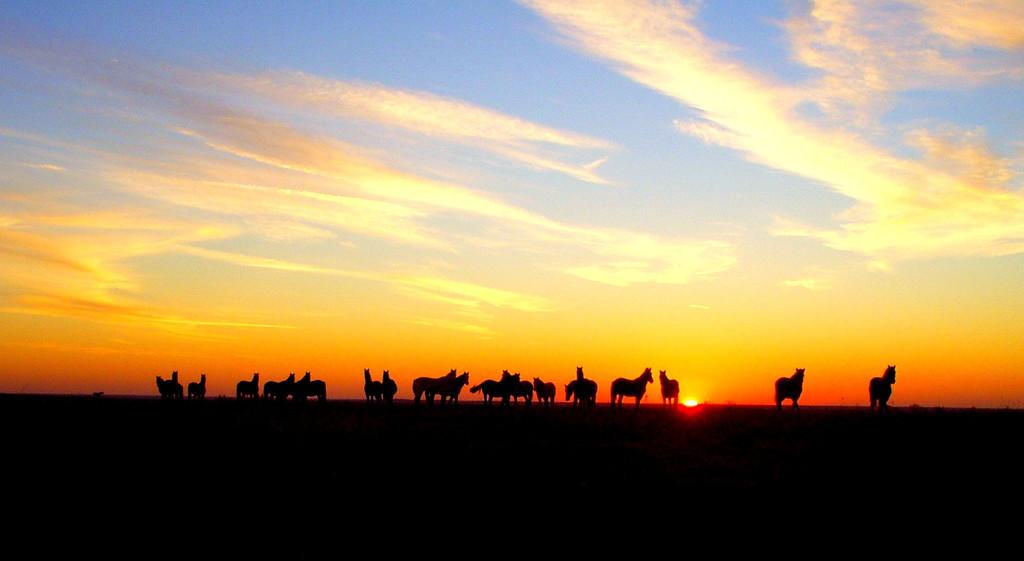 Mustangs at Sunset          Photo by John Kliewer