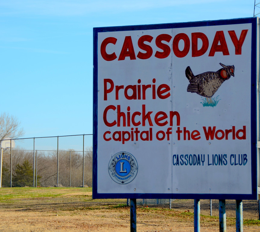 Once the site of large numbers of greater prairie chicken, habitat changes around Cassoday have resulted in reduced numbers.