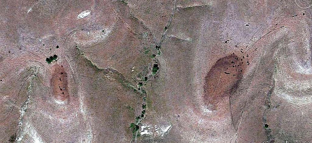 Google Earth satellite imagery shows mustangs clustered on several hills just south of Teter Rock.