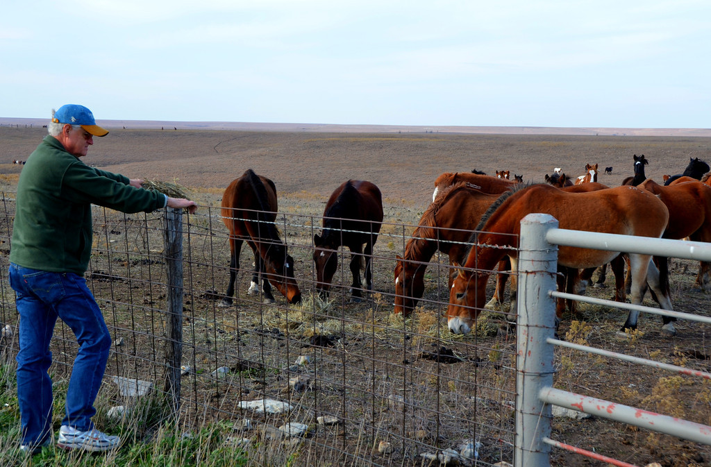 John and I enjoy tossing some hay to the mustangs. <br /> <br /> They cautiously approached our offerings.